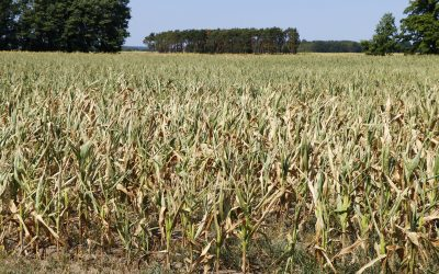 Der Dürre-Sommer lenkt den Blick auf gravierende Strukturunterschiede